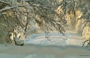 Schneefräse kaufen Test